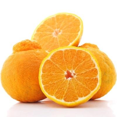 柑橘正确的采摘技术