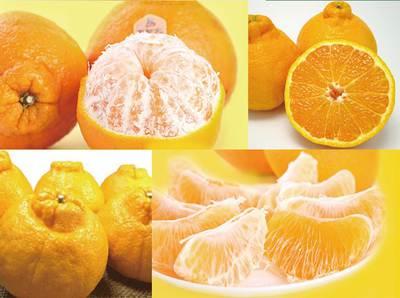 不知火柑橘销售进一步趋于理性