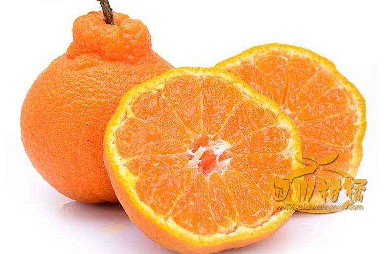 不知火丑橘专业技术方面都在全国是数一数二