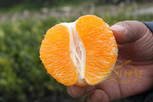腐殖酸在柑橘行业的用途