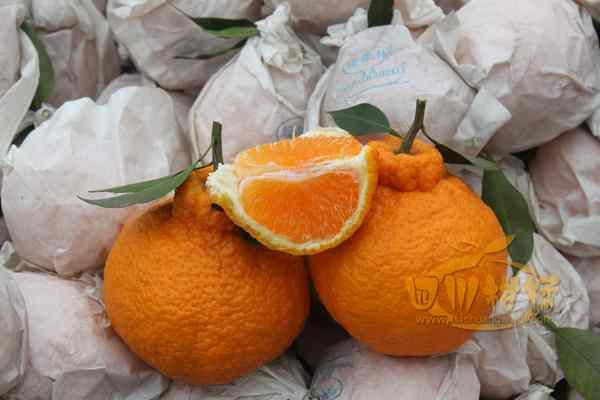 库区建设长江杂柑柑橘带的产业需求