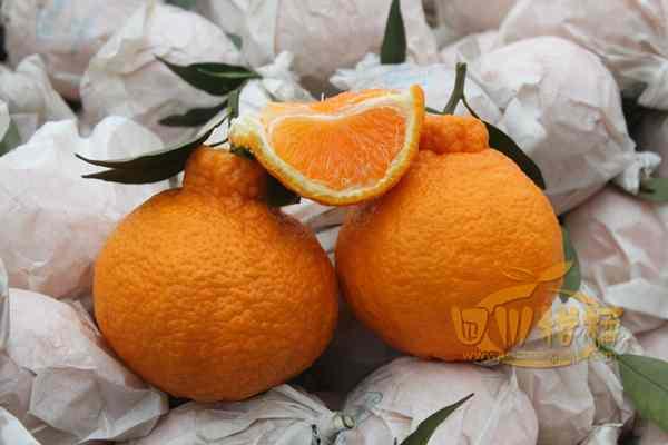 把品种改良做为提高不知火柑橘产业
