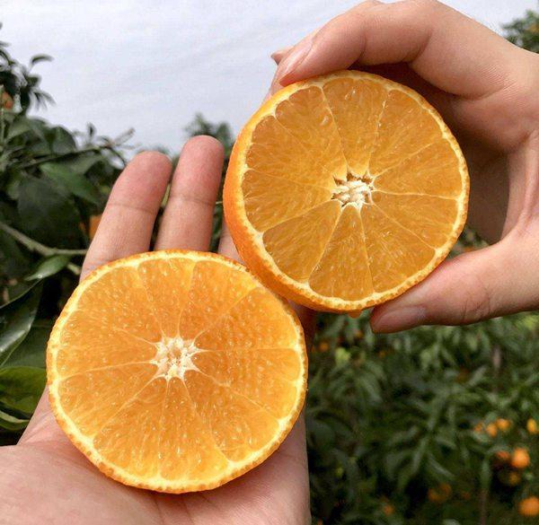 爱媛、沃柑、丑柑这些柑橘的新品种怎么区分?