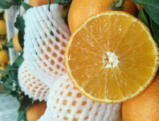 爱媛38号柑橘为日本杂交柑桔新品种 主要种植在四川的蒲江和丹棱