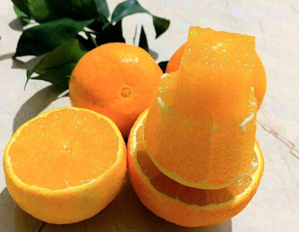 柑橘种植:爱媛38号优缺点及注意事项