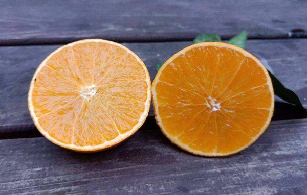 爱媛38号柑橘优缺点