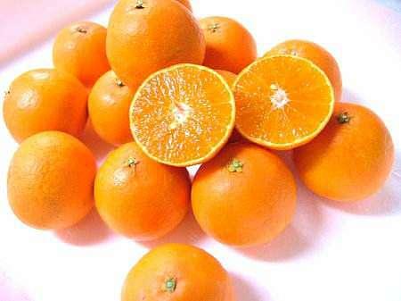 增加中熟丑柑和爱媛38品种 效益大幅提高