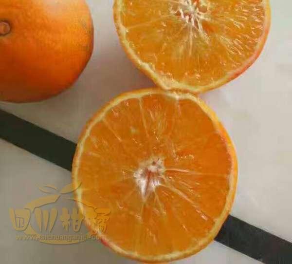 永江还引进了爱媛28红美人柑橘,提升经济效益