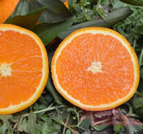 爱媛38柑橘品种